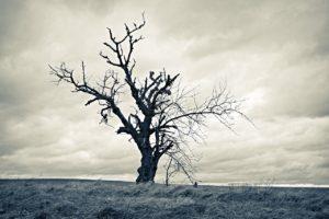tree-3030038_1280